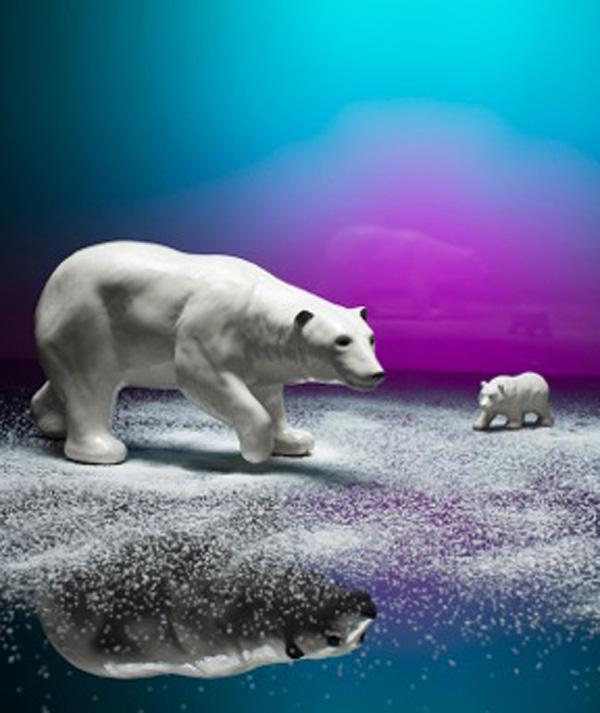 photo_bears