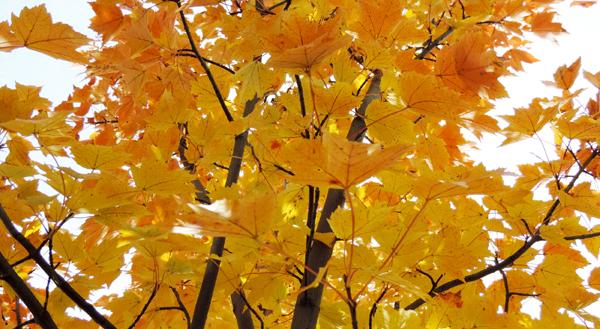 photo_fall