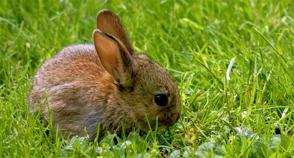 photo_bunny