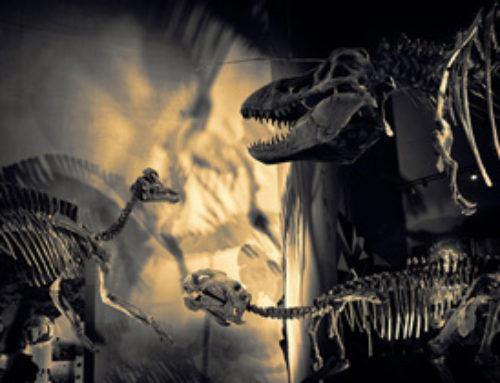 Dinosaur – work in progress